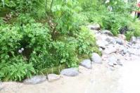 ravine-garden.jpg